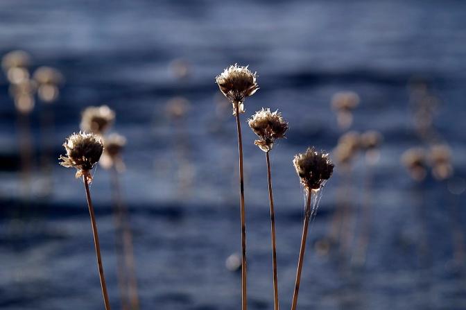 Seed heads.