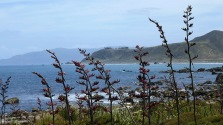 Flax along the shore