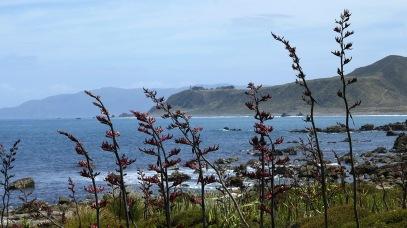 Flax along the shore